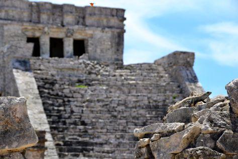 Spot the Iguana - Tulum Ruins