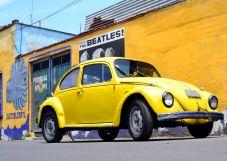 Chasing Beetles - Xochimilco, Mexico City