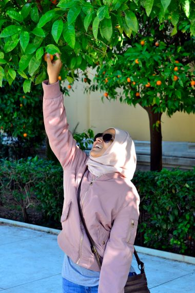 Athens, Bitter Orange Trees